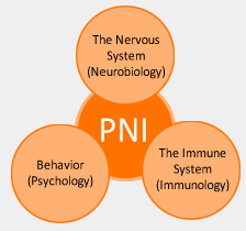 Psychoneuroimmunology----Institute of Psychology, Chinese Academy ...